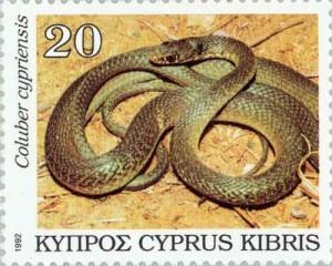 2014.08_Hierophis cypriensis